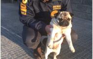 En Rancagua roban mascota y luego solicitan recompensa para recuperarla