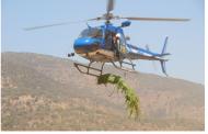 PDI incauta importante plantación de marihuana en Pichilemu
