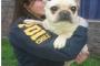 Rancagua: PDI recupera perro evaluado en un millón y medio de pesos
