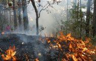 Carabineros detiene a mujer que provocó incendio forestal