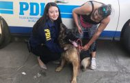 PDI recupera perro pastor alemán extraviado en sector poniente de Rancagua