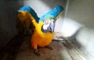 PDI y SAG incautan aves exóticas en Chimbarongo