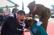 Pehuén: El perro policial al que el Intendente Masferrer distinguió en el Día del Carabinero