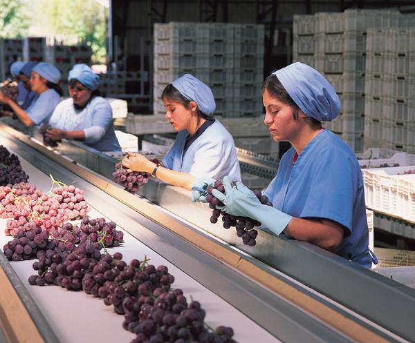 Tasa de desocupación en la región bajó a 6,0%