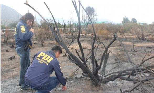 PDI  lanza campaña para prevenir los incendios forestales