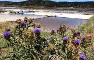 Salineros de Cardenal Caro pronostican una buena temporada en la cosecha de la sal de mar