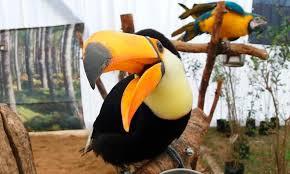 Aventura Animal: Los más diversos animales exóticos llegán a Rancagua