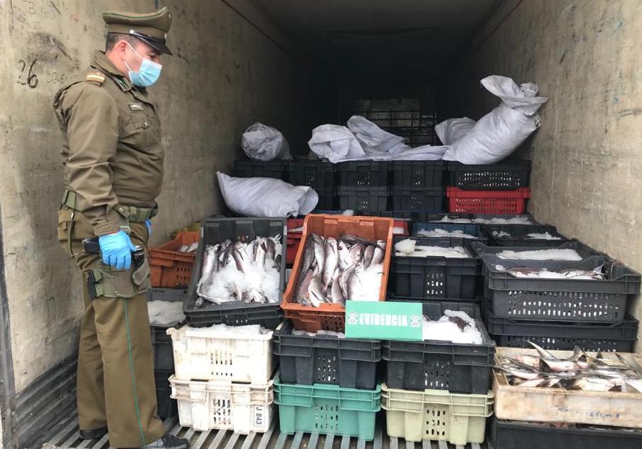 Semana Santa: Carabineros y Sernapesca decomisaron 15 toneladas de merluza
