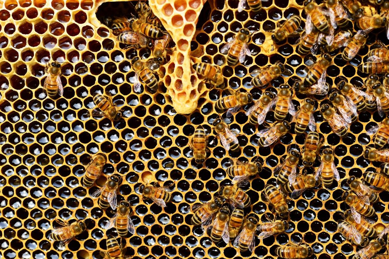 Universidad de O'Higgins celebra #DiaNacionalDeLaMiel con seminario para potenciar la apicultura regional